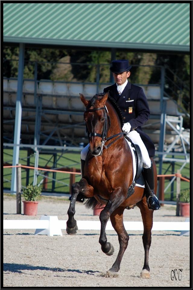 Os-Nervi, un parmi les chevaux PRE dont on devrait parler en 2013. (photo KT)